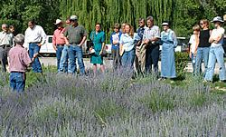 A Guided Tour of Los Poblanos Lavender Fields