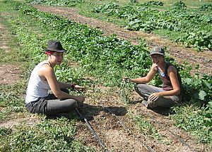 Interns Working in the Field