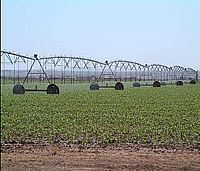 Irrigation in the Estancia Basin