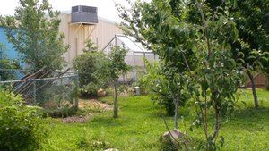 Mountain Mahogany Charter School Greenhouse